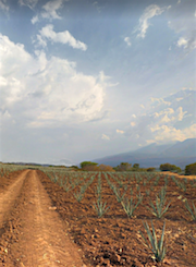 Tequila farm.png